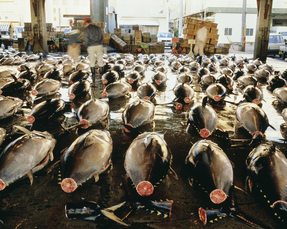 Ton Balıkları Ethereum Blockchain