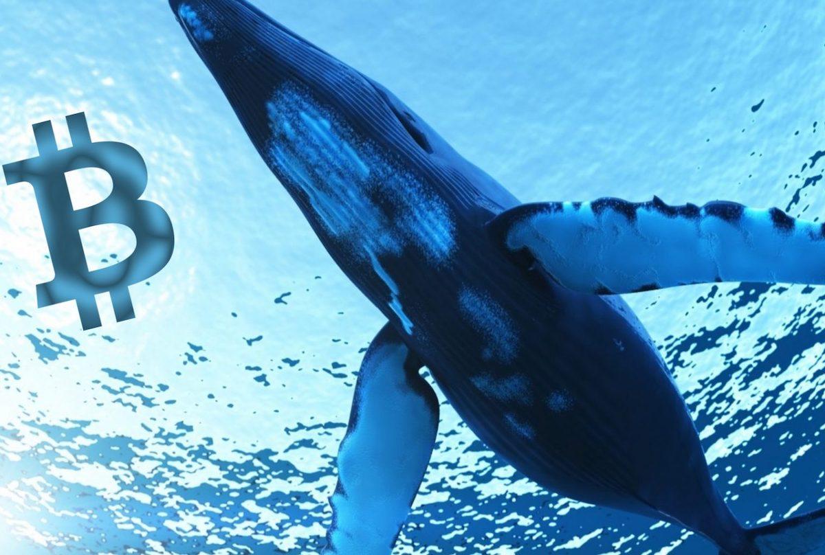Bitcoin Balinaları 1