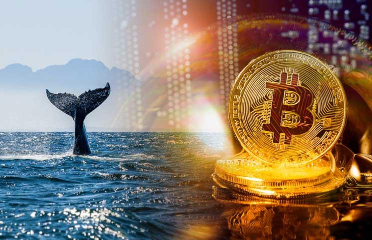 Bitcoin Balinaları Bitcoin Fiyatı BTC Fiyatı