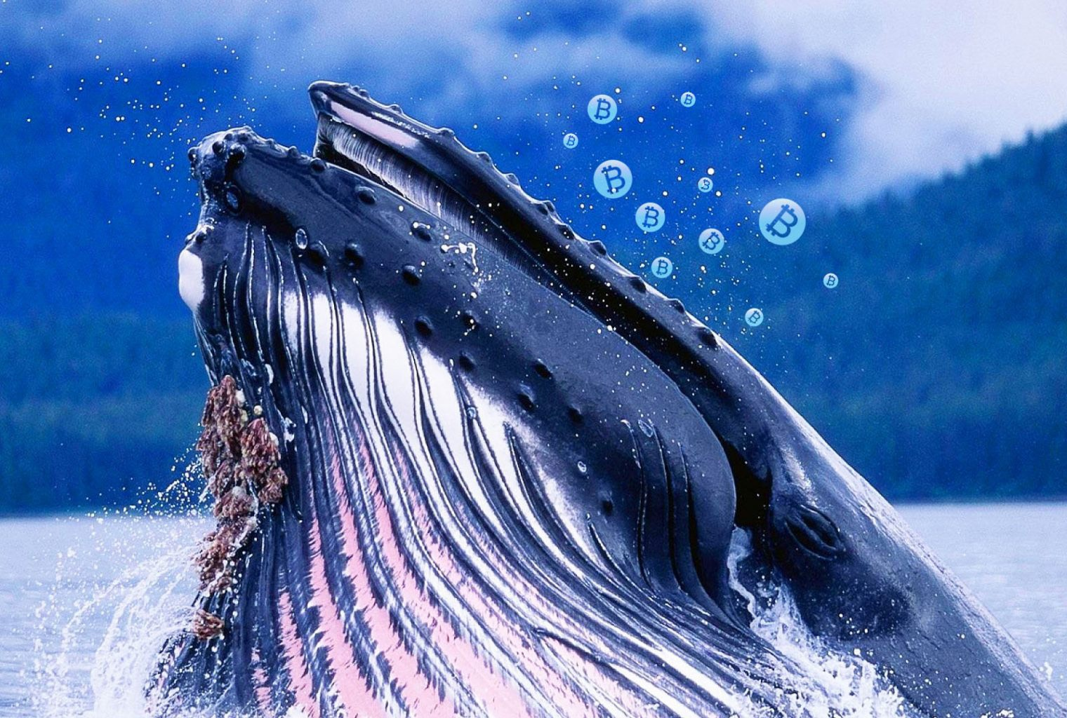 altcoin balina servet dağılımı