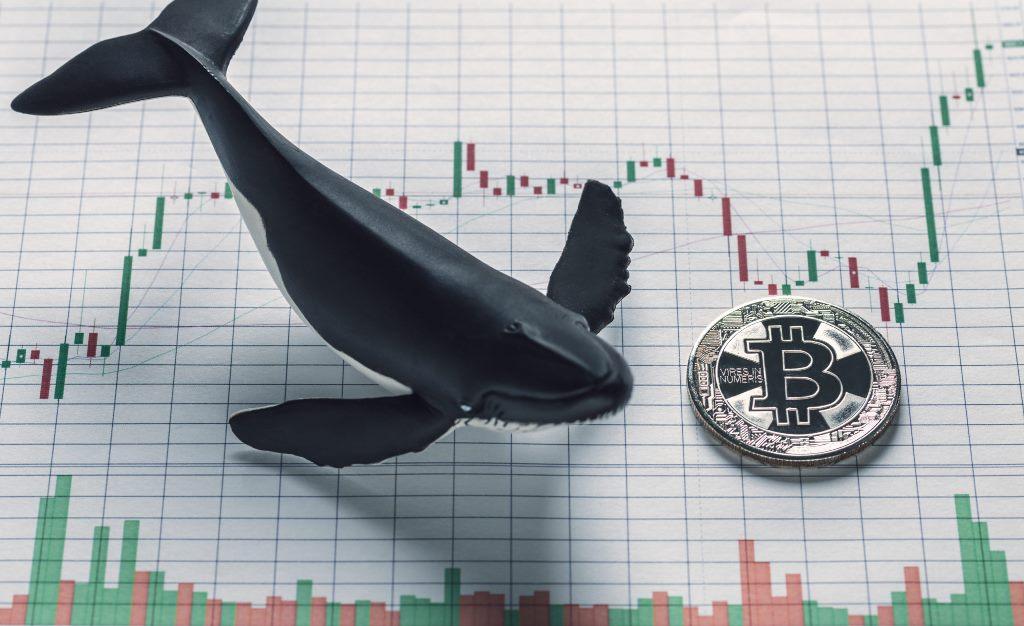 Balina Uyarısı Dev Bitcoin Transferleri Gerçekleştiriliyor