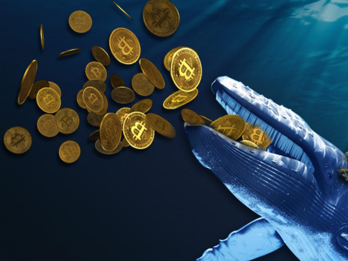 Bitcoin BTC Balinası Kripto Para Yatırımcılarını Uyardı