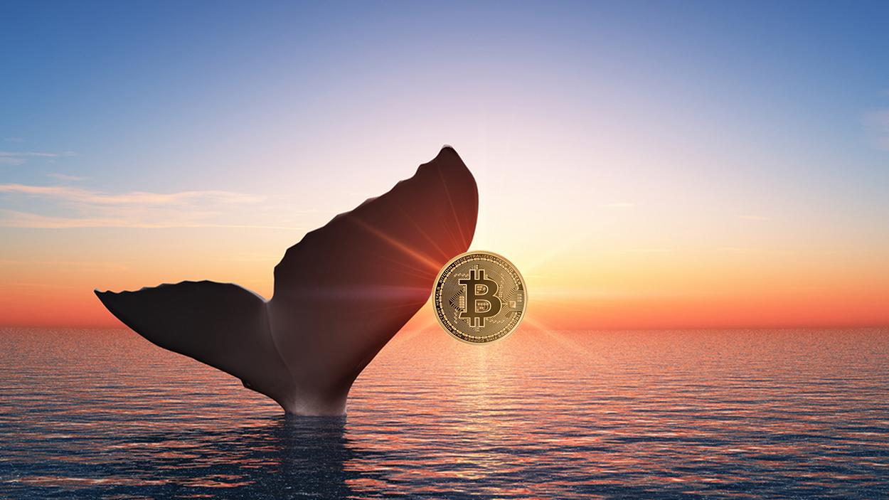bitcoin 466 milyon dolarlık transfer
