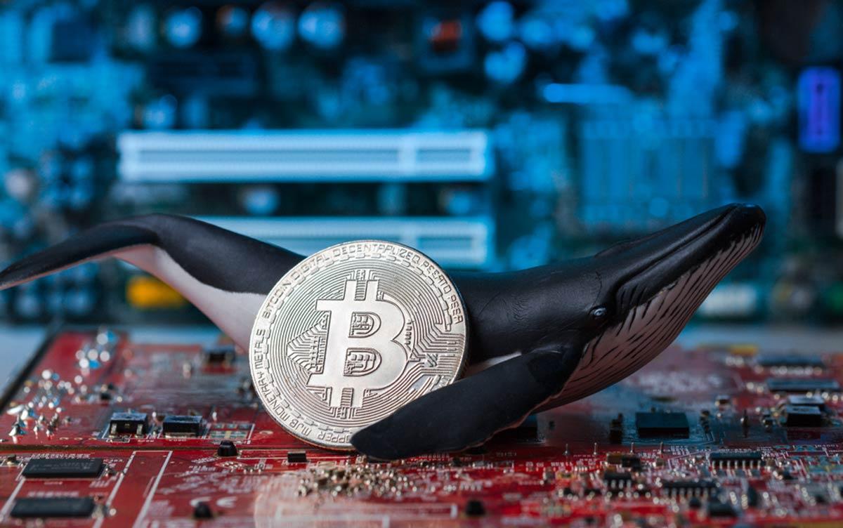 bitcoin balinaları perspektif değiştiriyor