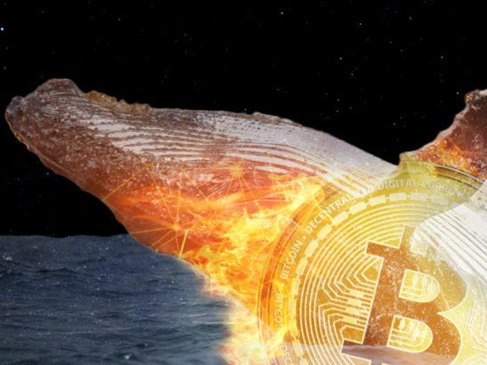 bic btc bitcoin whale wallet 1200x900 1