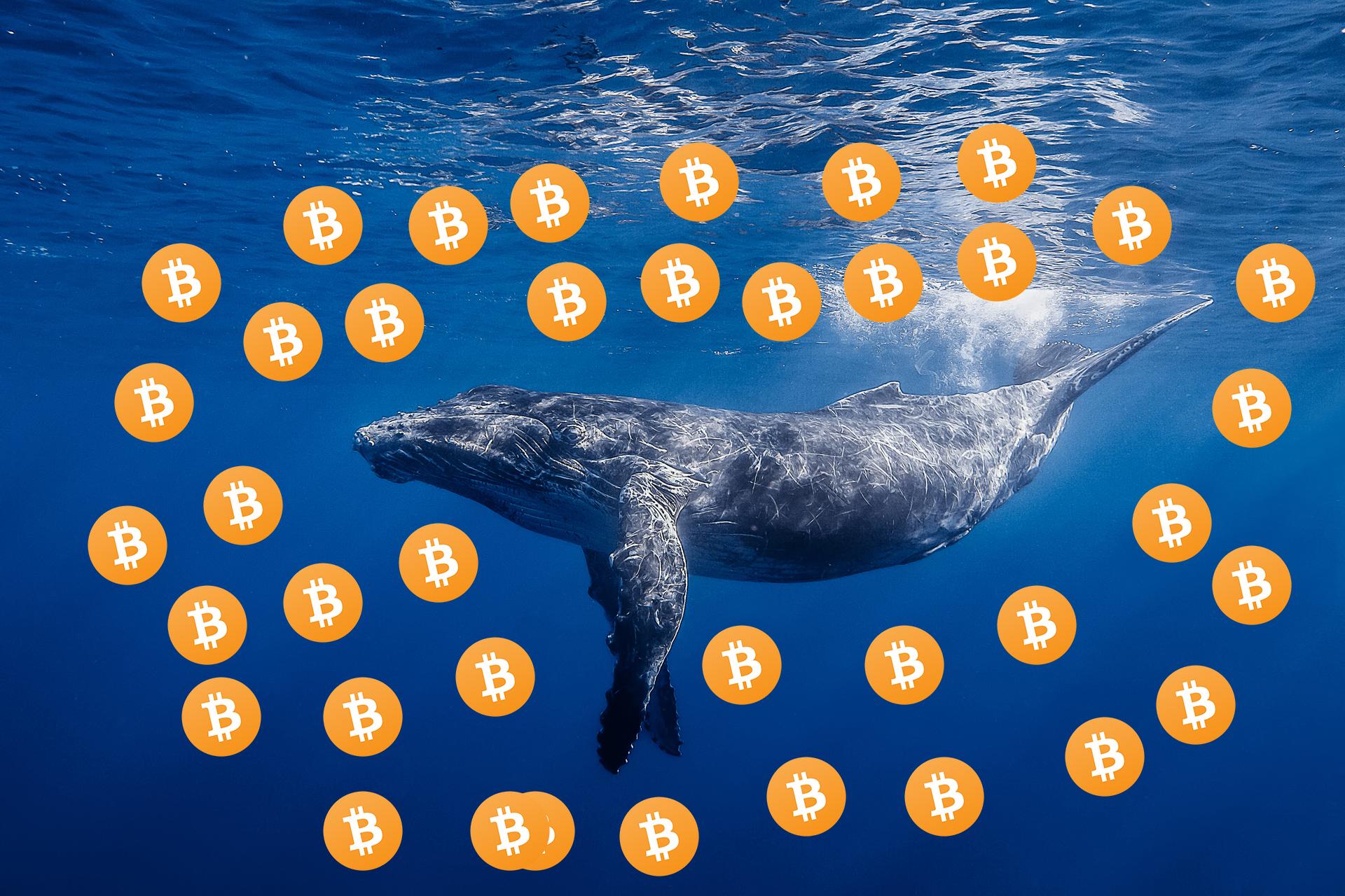 Balinalar Arttı Ufukta Bir Boğa Koşusu Var mı