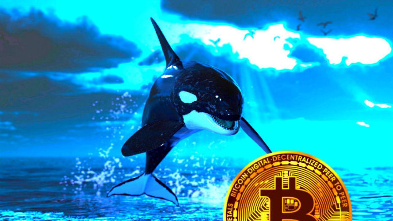 Bitcoin Balinaları Hareket Halinde 186.000.000 Dolar Değerinde BTC Taşındı