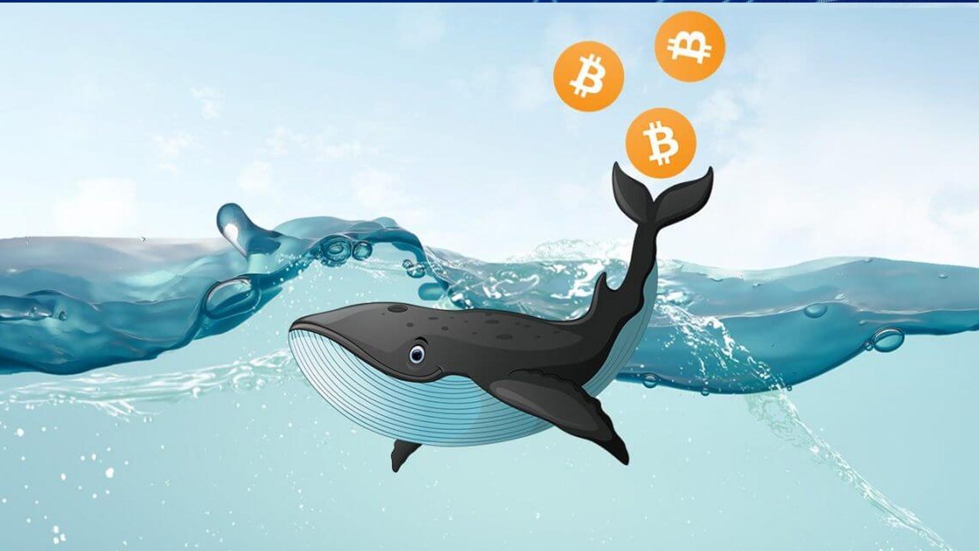 bitcoin balinalarin sayısında artis meydana geldi