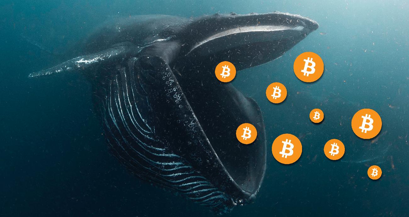 bitcoin balinası ekonomi hakkında konuştu