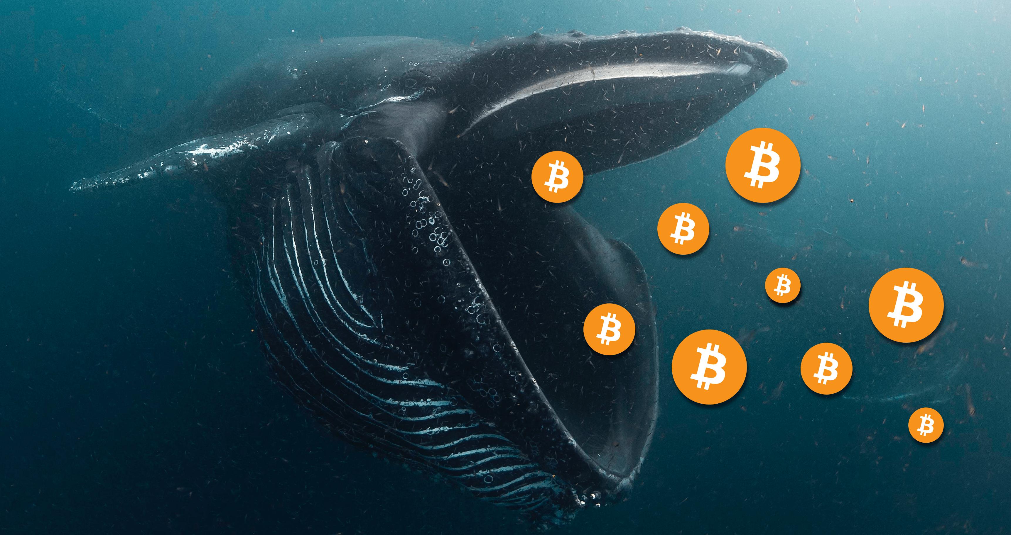 Bitcoin balinaları yarılanma oncesi birikimlere basladı