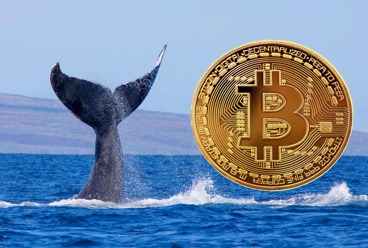 állások a btc számára bitcoin sdk