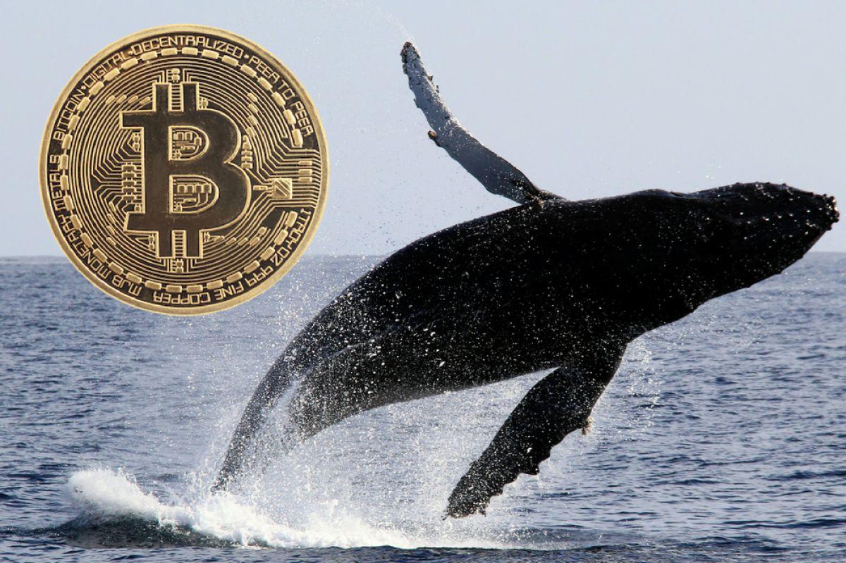 bitcoin balinası uyarı verdi