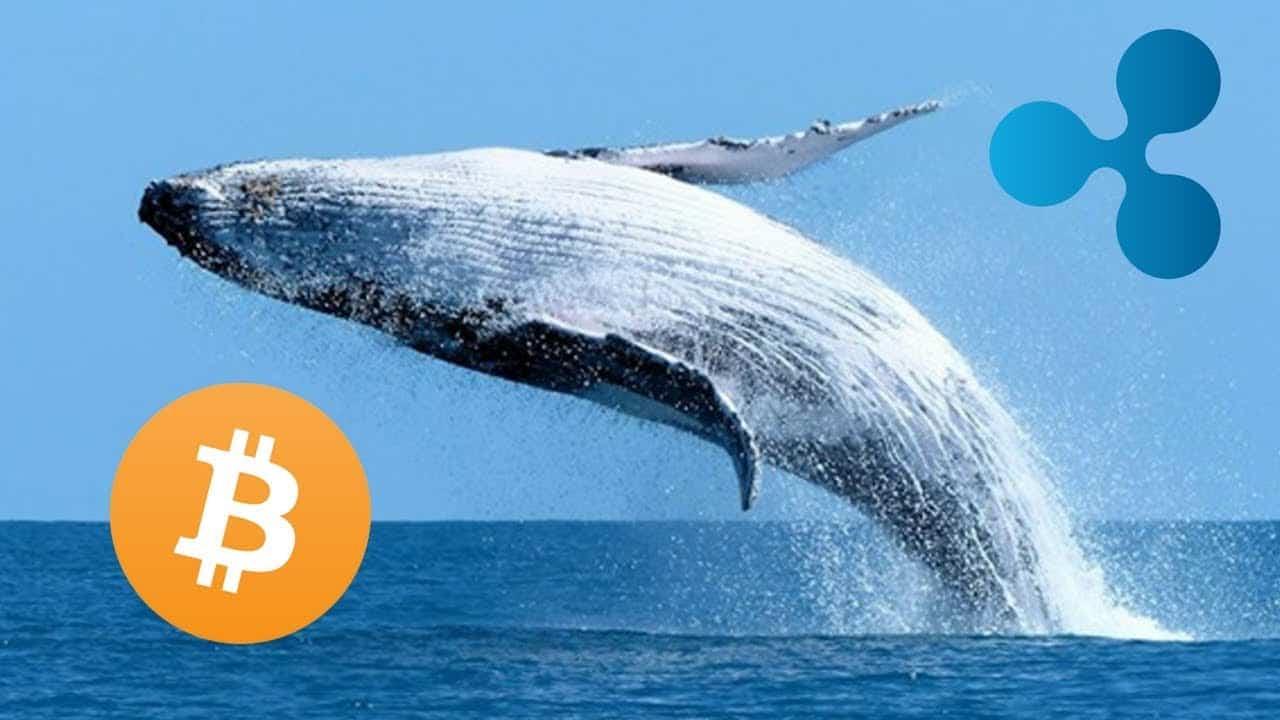 Bitcoin BTC ve XRP Balinalarının Yaptığı Büyük İşlemler Kripto Piyasasında Paniğe Sebep Oluyor