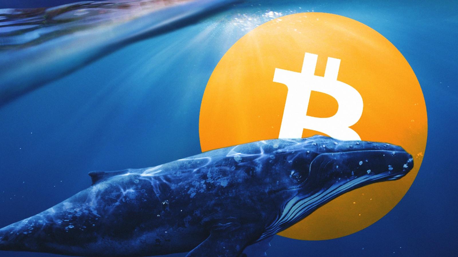 Endişeli Bakışlar Arasında Devasa Balina 1.24 Milyar Dolarlık Bitcoini BTC Taşıdı