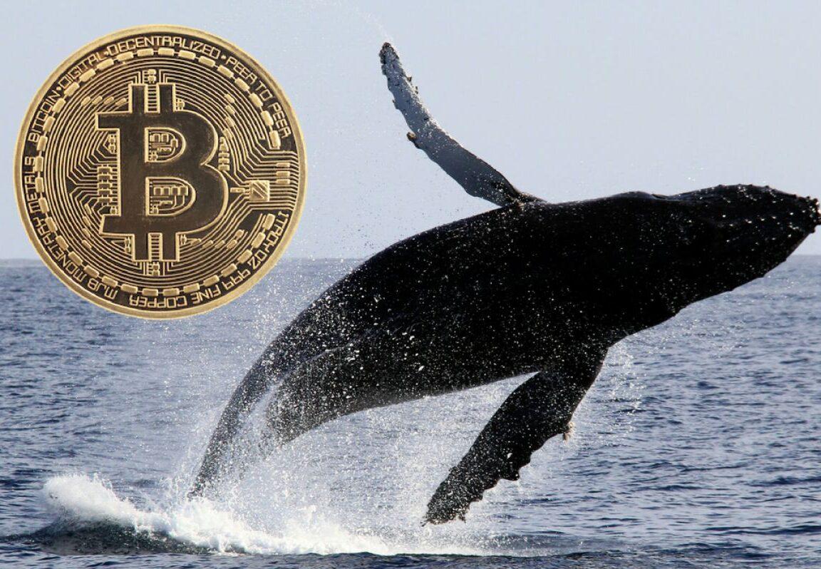 bitcoin balina