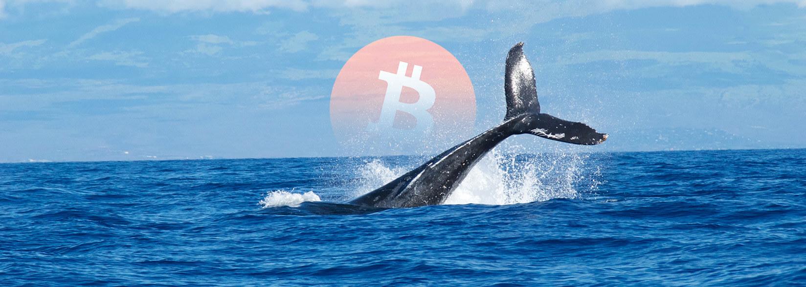 Bitcoin Balinası BTC