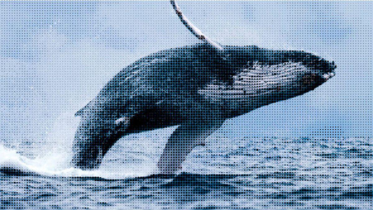 ethereum balinalari hareketlendi
