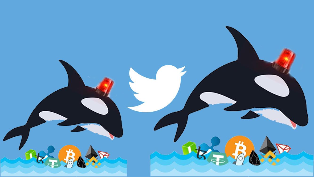 son dakika whale alert twitter hesabı kapanacak mı