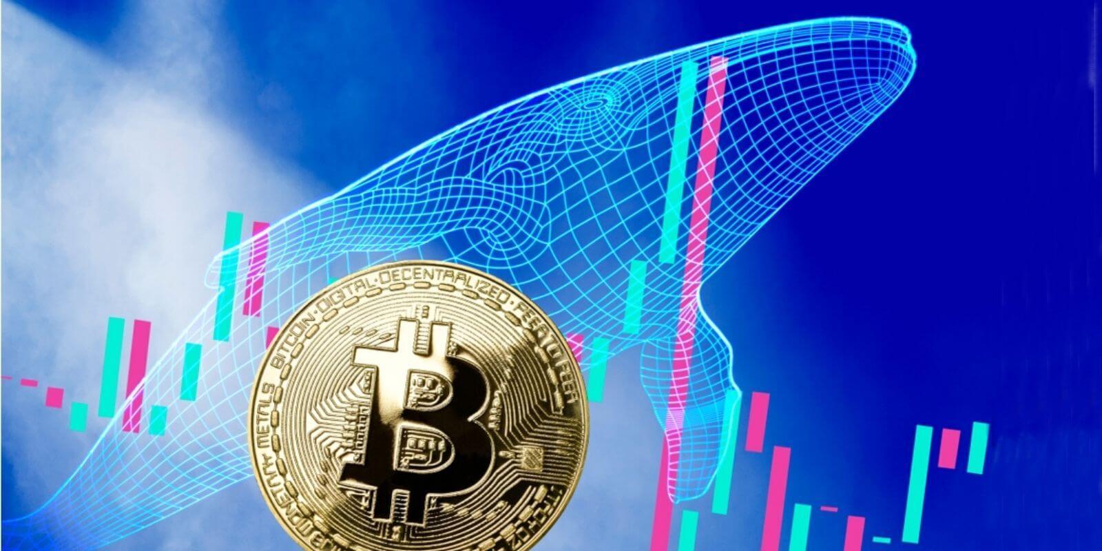 Bitcoin Islemlerinde Buyuk Artis Yasanirken BTC Balinalari 100 Milyon Tasidi