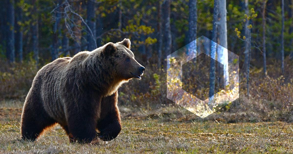 chainlink bear