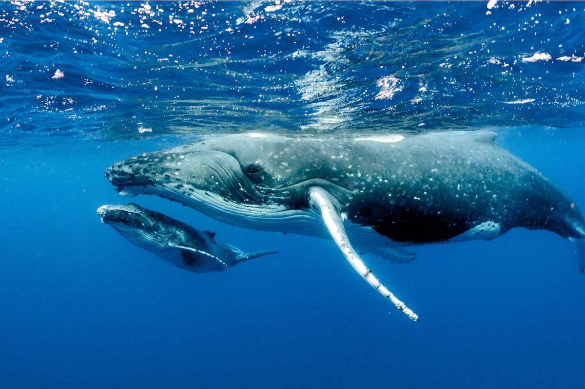 bitcoin balinalari