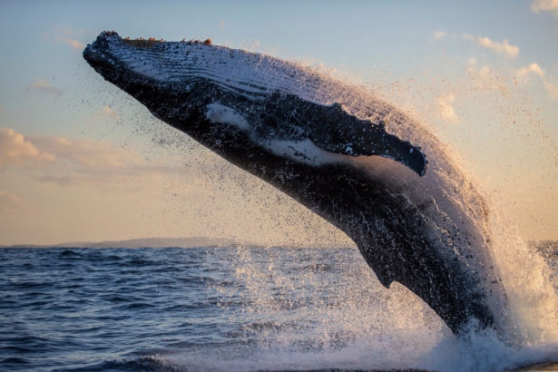 mevcut balina trendi satis baskisi ongoruyor