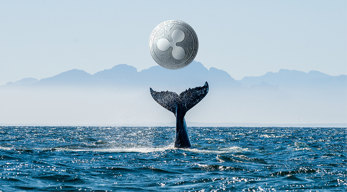 balina alarmi yatirimcilar spark airdropuna mi hazirlaniyor