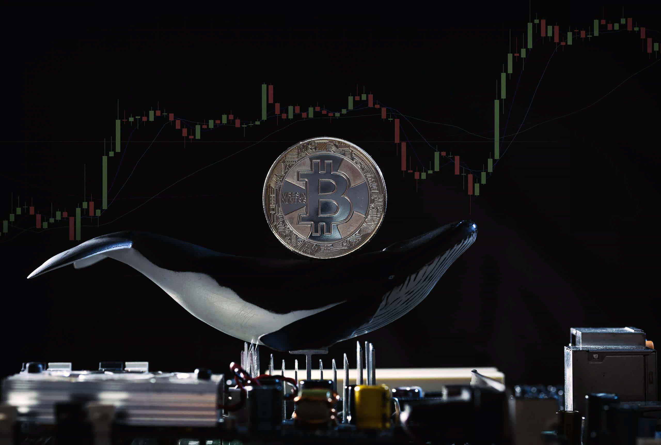 bitcoin balinasi artis yasiyor btc fiyati bitcoin fiyati