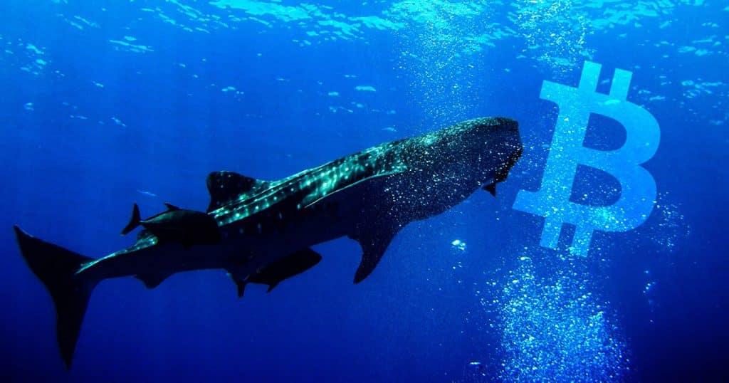 bitcoin btc balinalari btc satin almaya devam ediyor