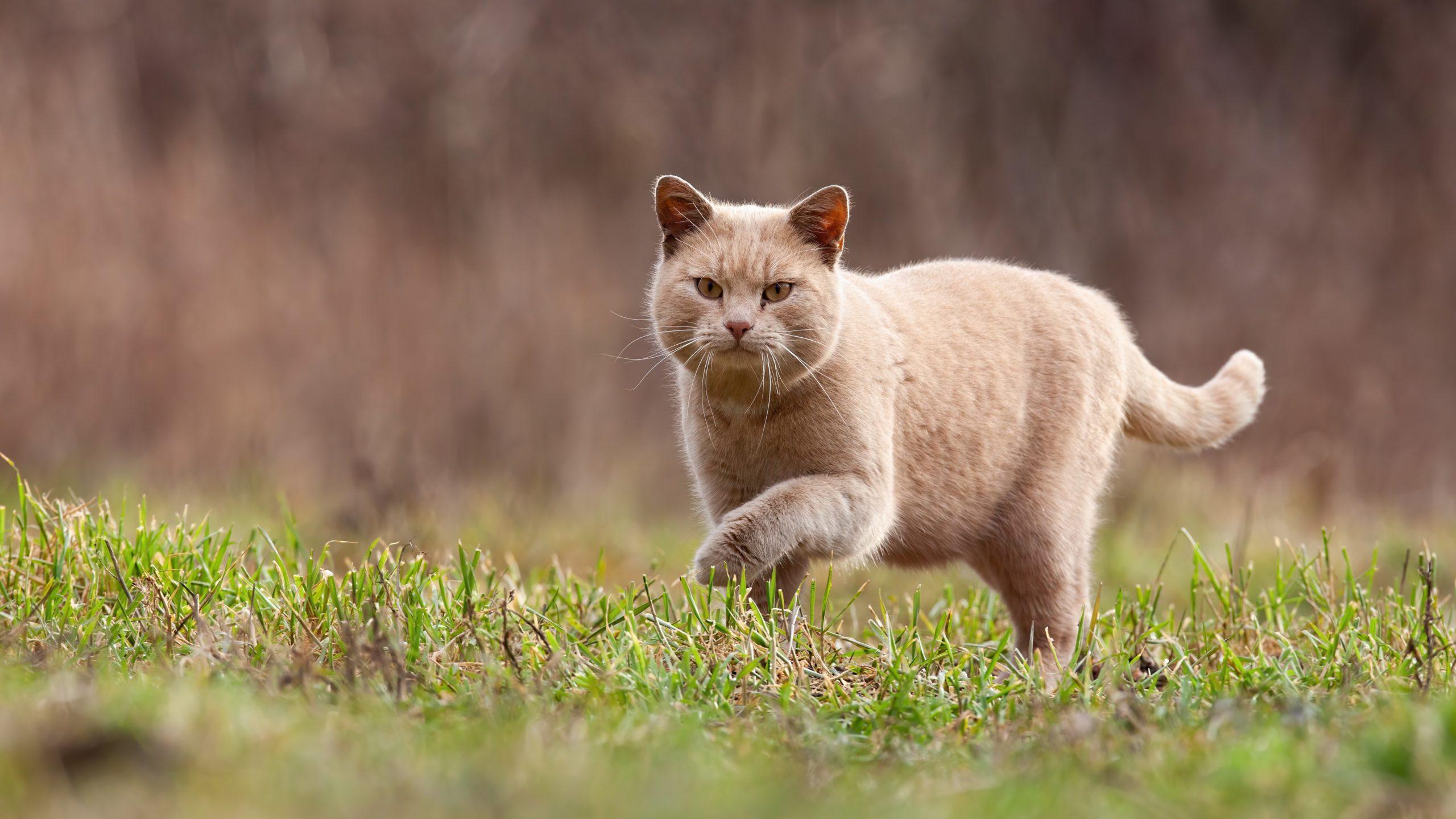 cat kedi