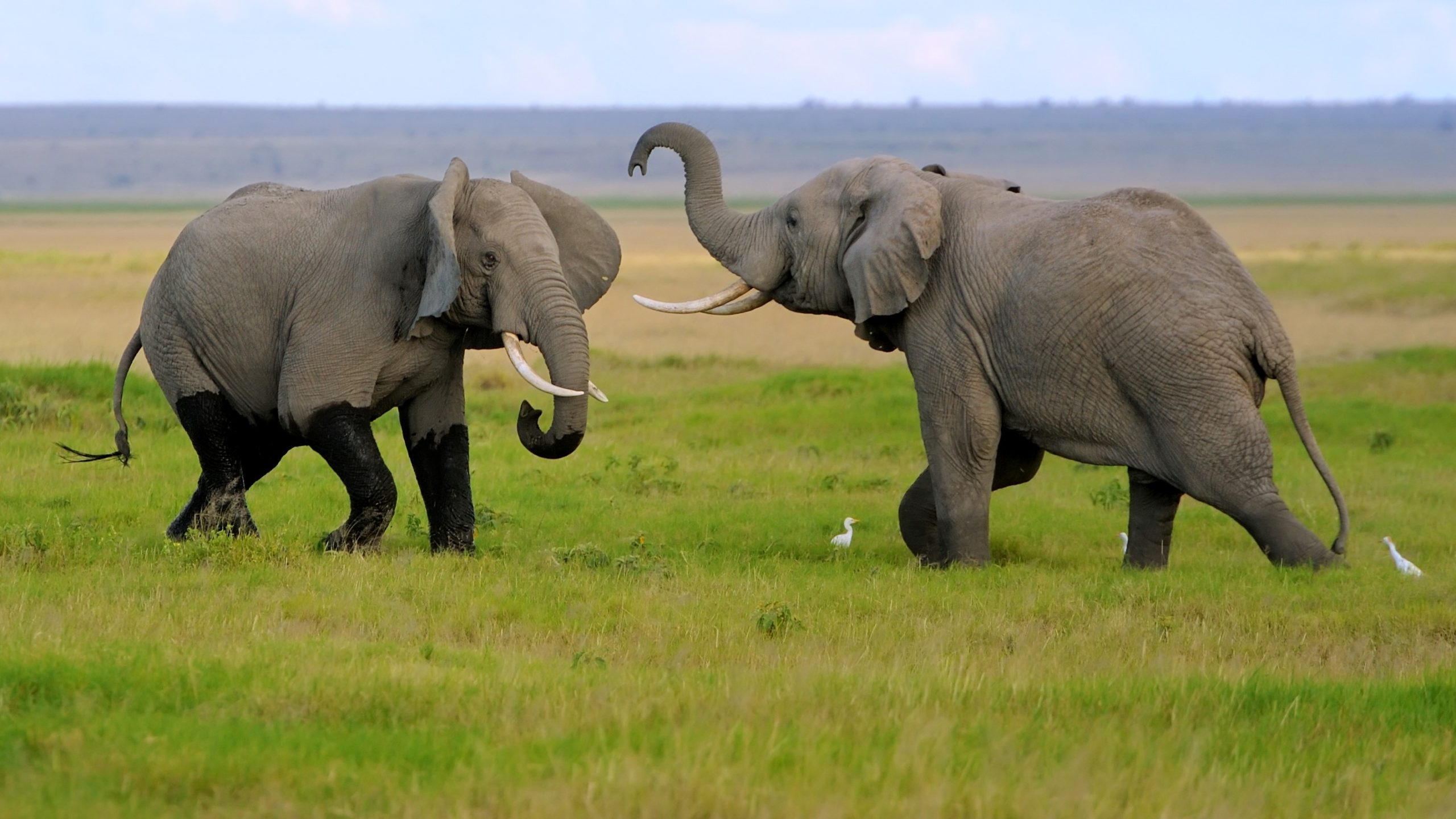 elephant fil