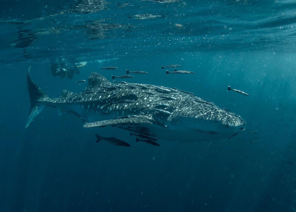 kripto para balinalari ethereum eth satin almaya devam ediyor
