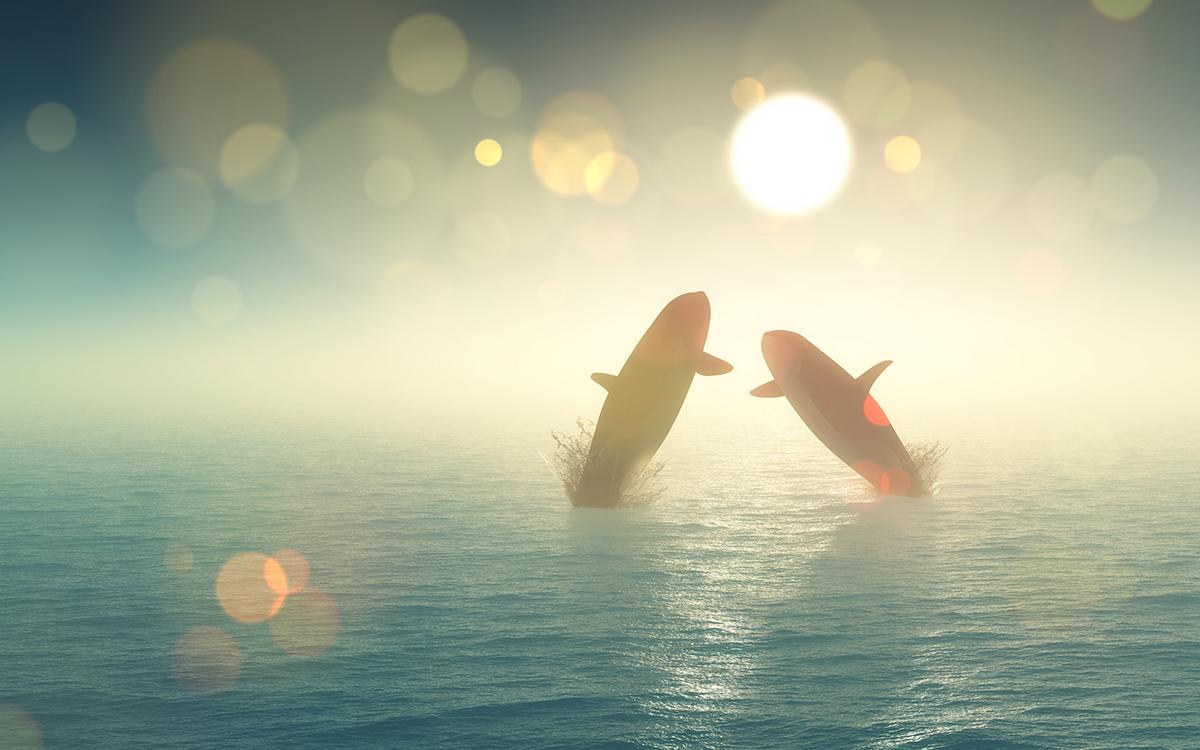 veri analiz sirketine gore balinalar esi benzeri gorulmemis bir sekilde bu altcoini topluyor