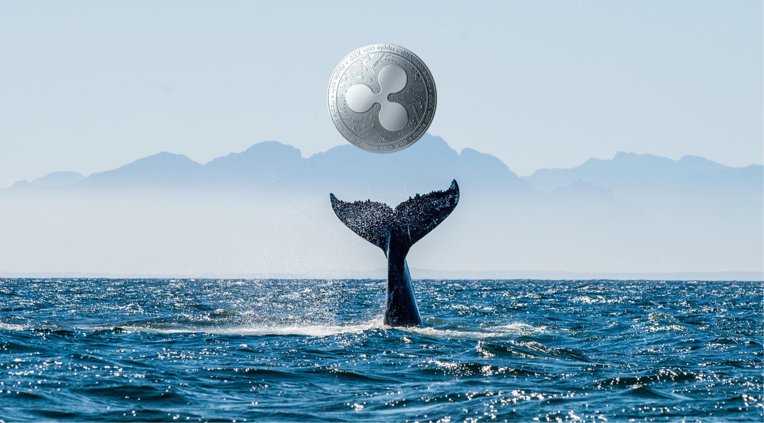 xrp balinasi ripple balinasi