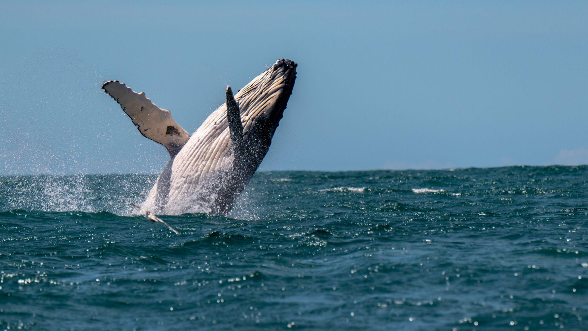 balinalar 296 489 280 dolar degerinde 600 milyon ripple xrp tasidi