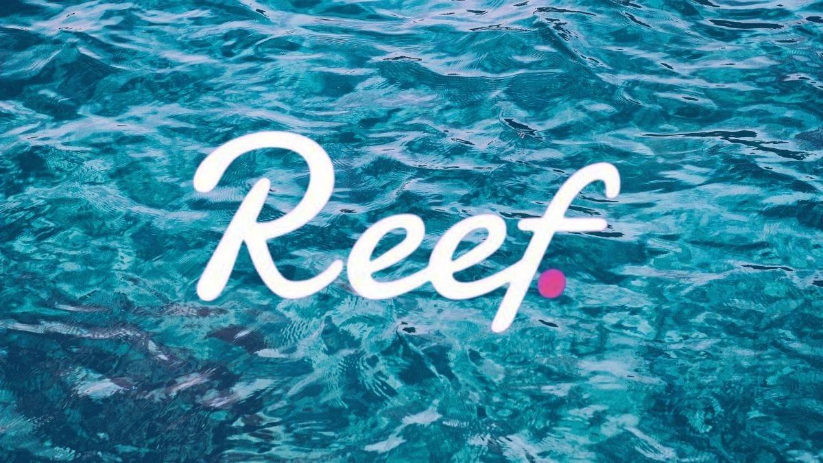 reef nedir