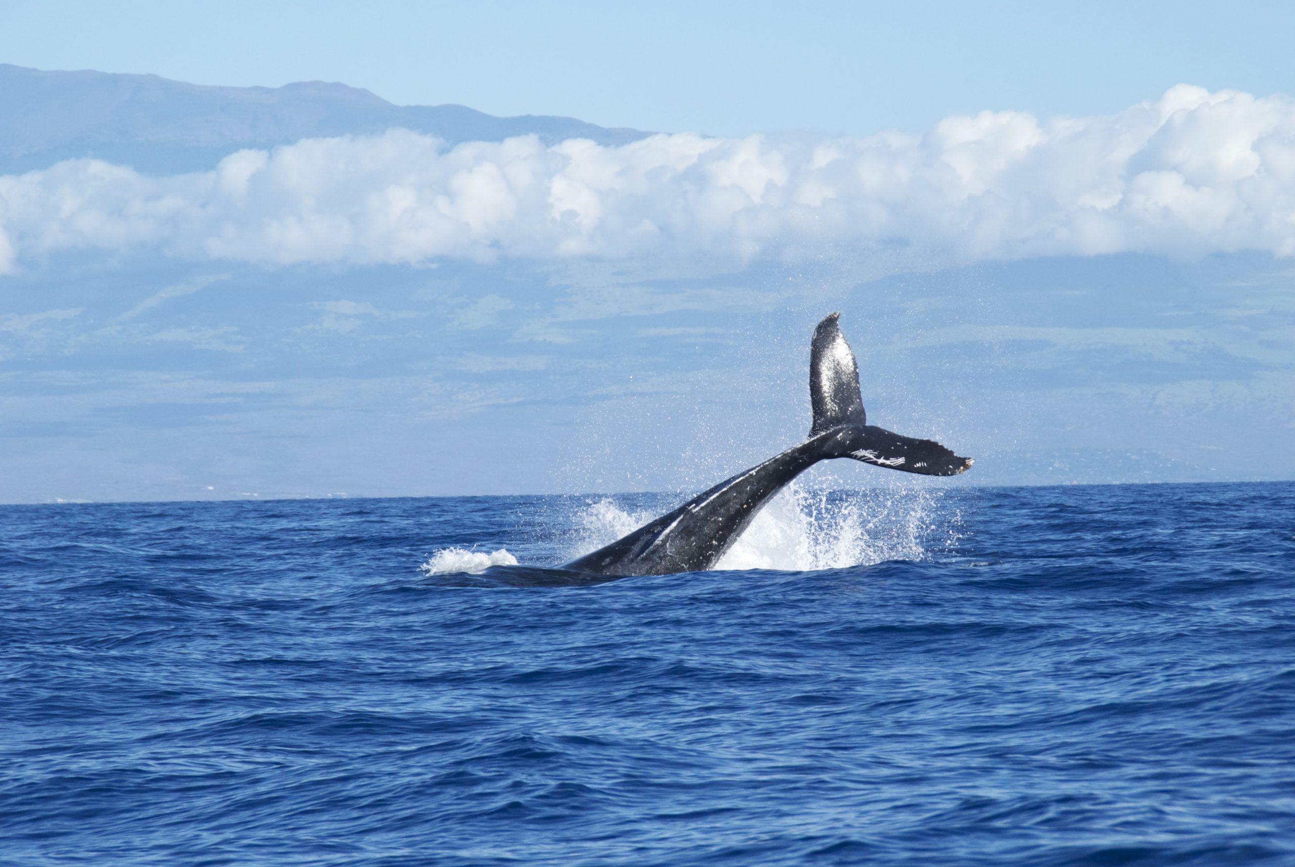 veri analiz sirketine gore balinalar hizla bu altcoini biriktiriyor