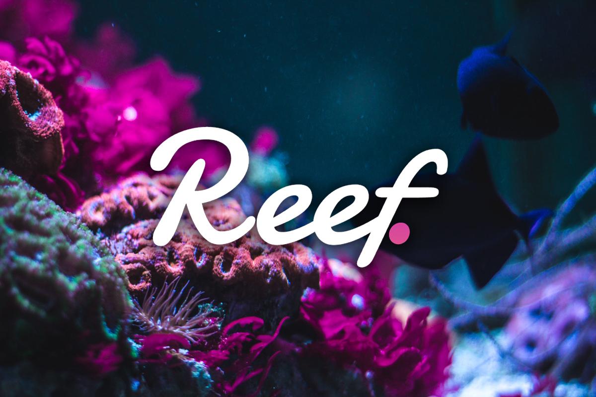 Reef finance yatirim reef token
