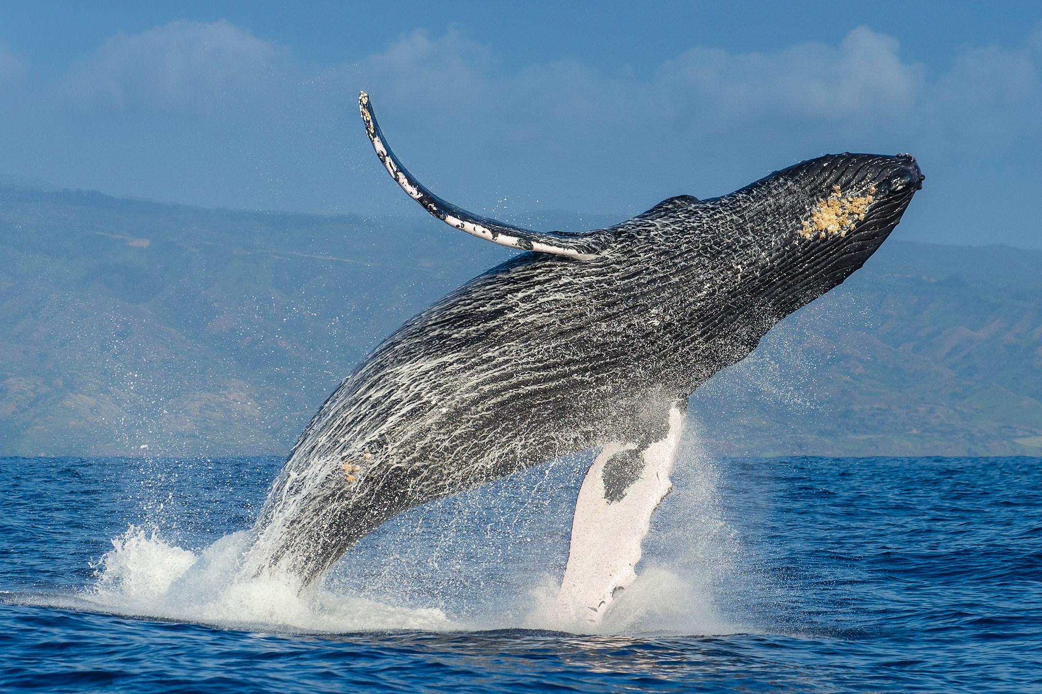 bitcoin btc balina cuzdanlari onemli olcude dustu iste 3 olasi neden 2