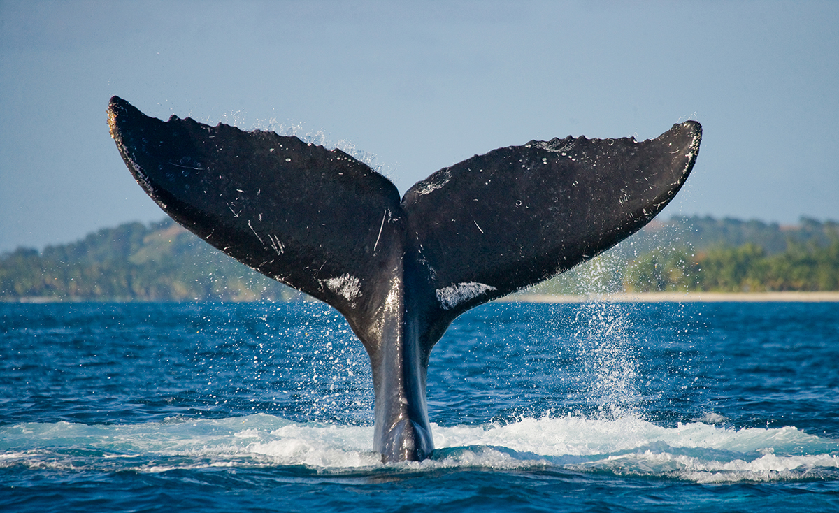 verilere gore balinalar hizla bu altcoini biriktiriyor