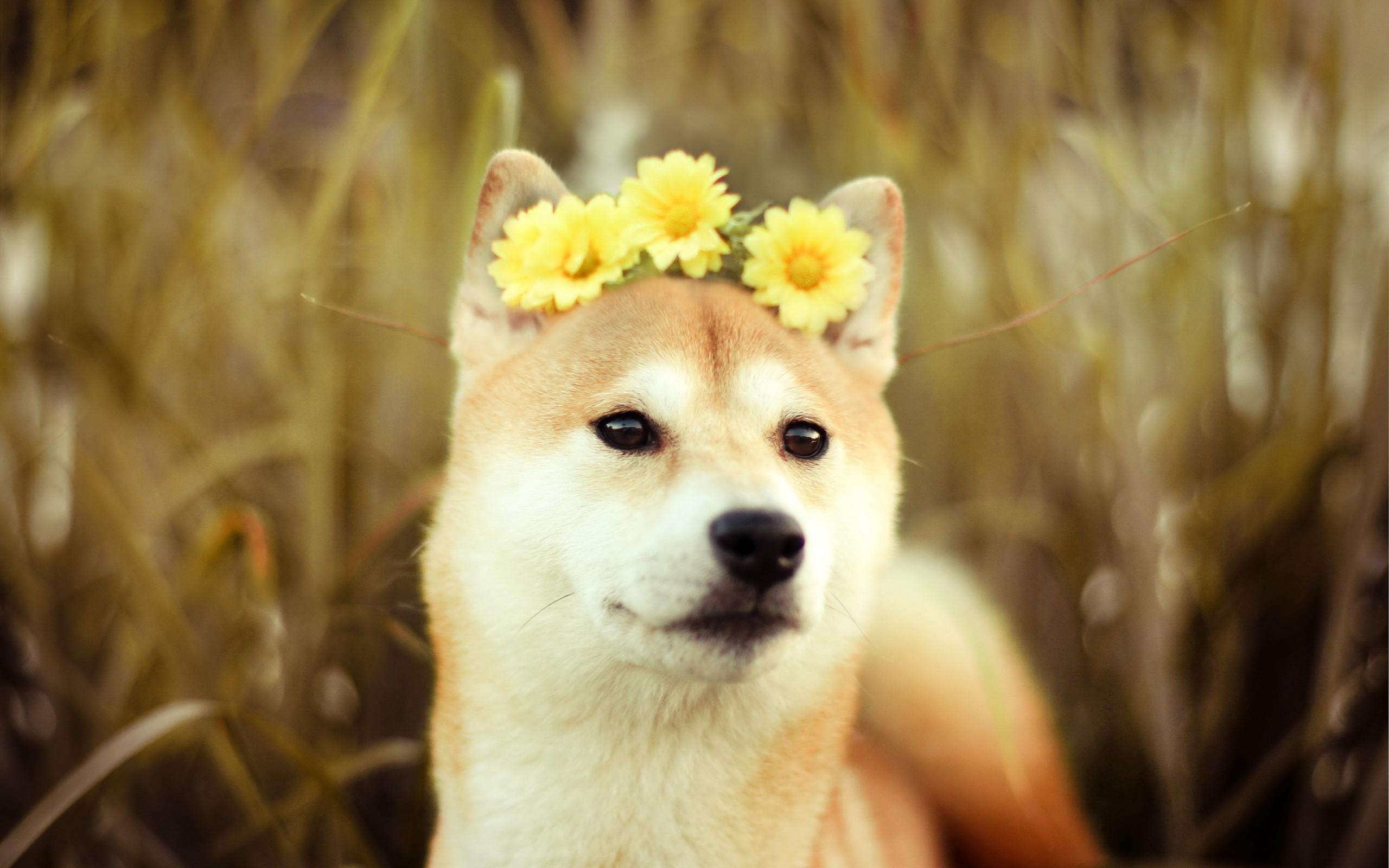 etoro doge