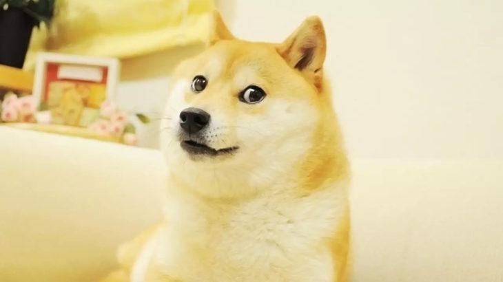doge 1
