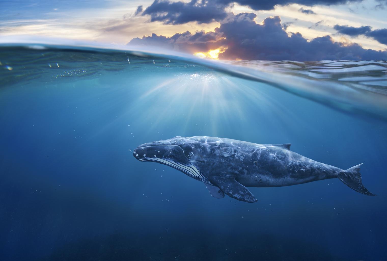 bitcoin balinalari biriktiriyor