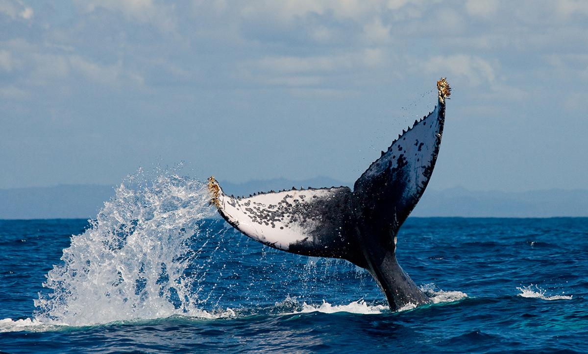 anonim bir balina buyuk potansiyele sahip oldugunu soyledigi 5 kripto varlik acikliyor