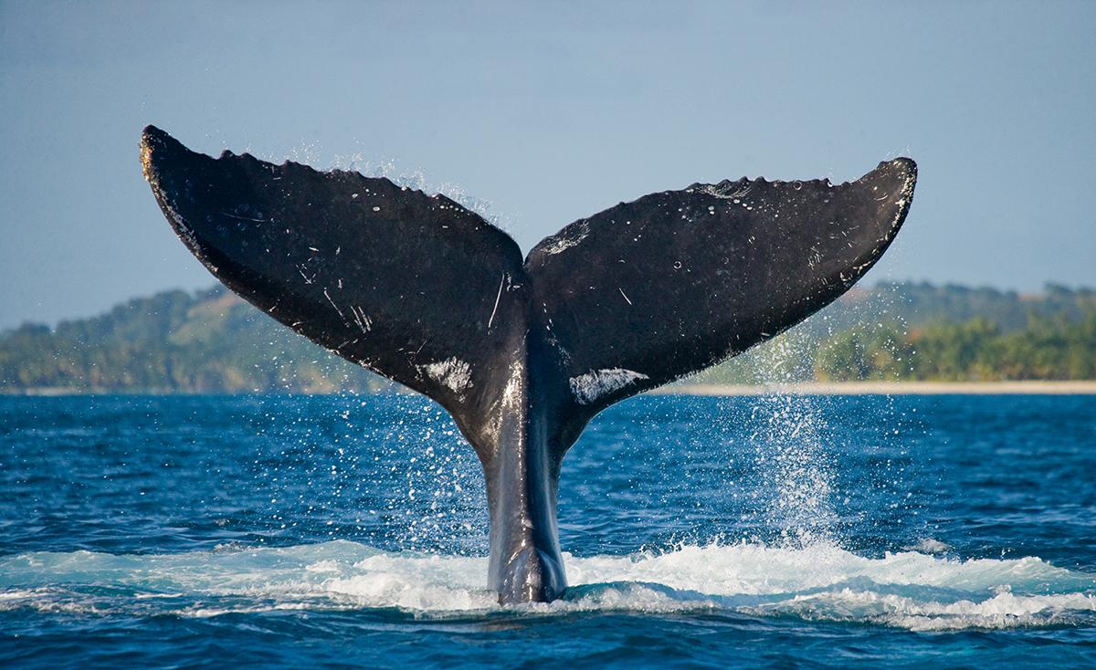 bitcoin btc balinalari harekete gecti bitcoin milyonerleri yeni bir ath belirlemek uzere 4