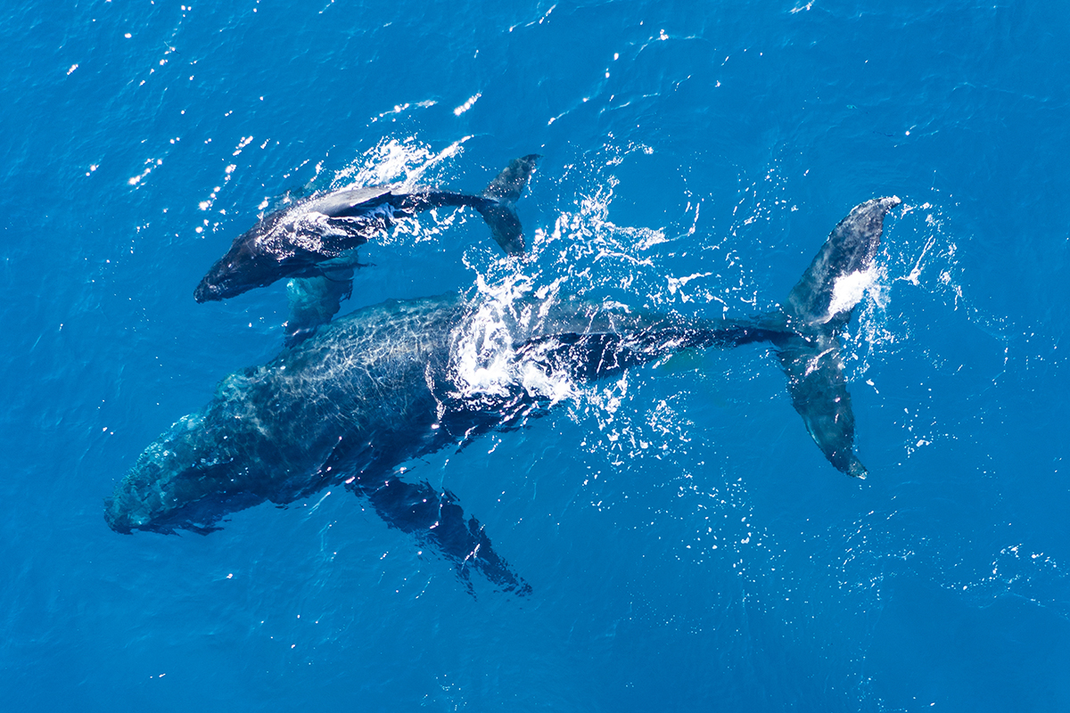santiment chainlink balinalari 1 45 milyar dolarlik link satin aldi